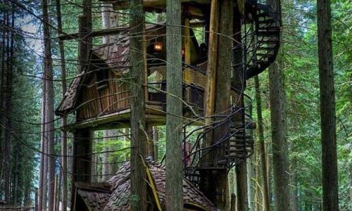 细数森林中的树屋,让你近距离享受自然