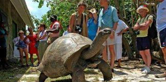 能活400岁,世界超大型又长寿的乌龟——象龟