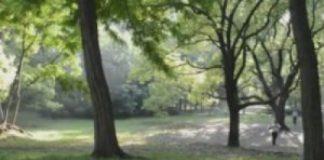 【音乐】森林之美–上海共青森林公园